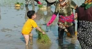 همکاری محمدطاها محمدی فرزند (حسن)در کار کشاورزی