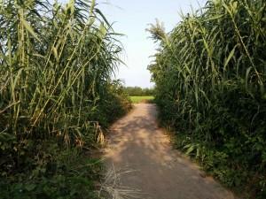 مسیر ورودی به ورزشگاه گیلاکجان