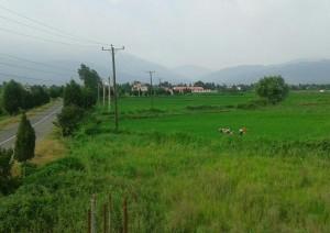 روستای سرسبز گیلاکجان