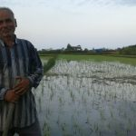 کشت مرحله دوم برنج در گیلاکجان توسط آقای رضا مرادی