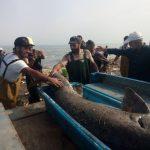 صید فیل ماهی توسط صیادان گیلاکجانی